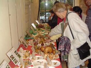 Week end des champignons des 25 et 26/10 + Dinfos et photos en page actu !